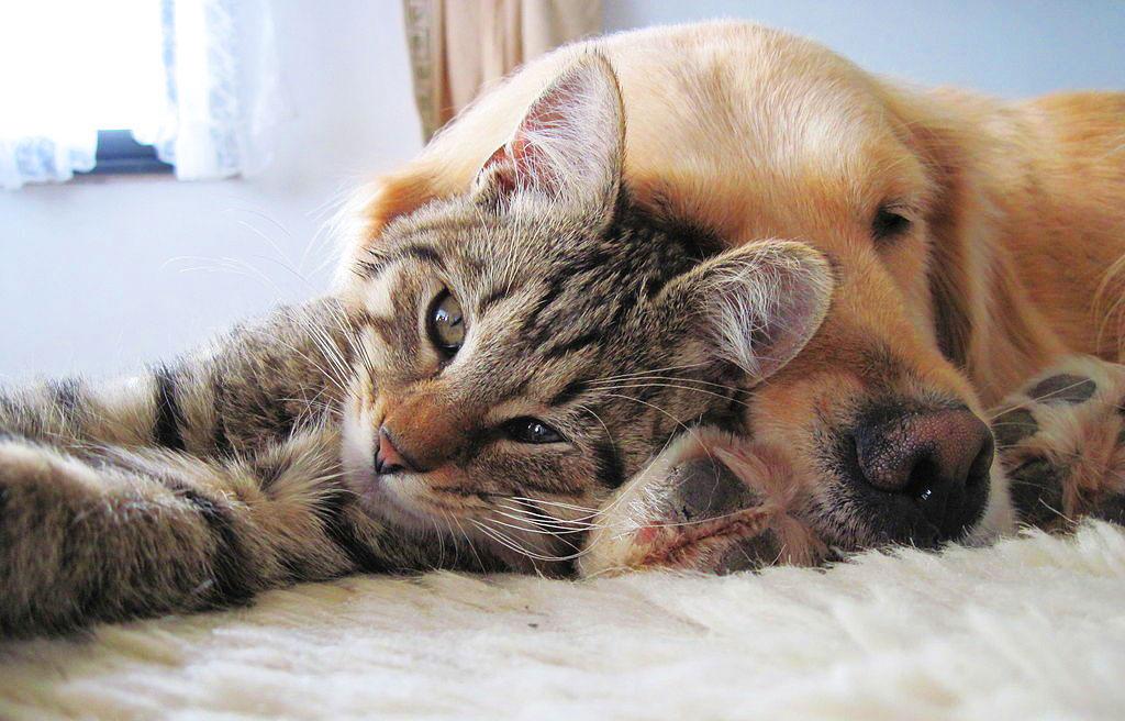 Pet Friendly - Strutture Turistiche per cani e gatti | Delizard Siti Web e SEO